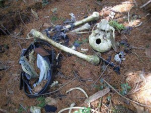 bosque-suicida3